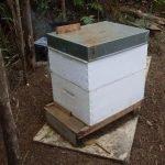 Honey 2 Inspection