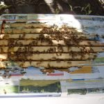 Honey 1 – Inspecting the merged hive