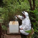 Margaret Check The Bethells 1 Hive