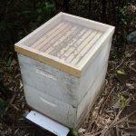 Honey 1 – Second Sugar Shaking the hive II