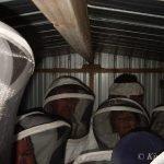 Bees Cluster Together