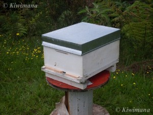 Common Langstroth Hive used at kiwimana