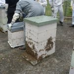 Bees after Inspection