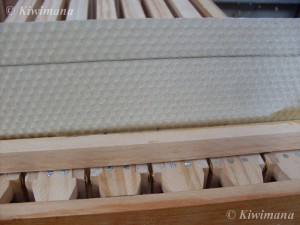 Bead of wax of Edge on foundationless frames