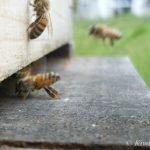 Bee Fanning