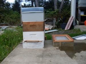 Empty Box on Parent Hive