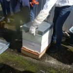 Hive to be inspected