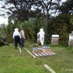 getting-ready-to-treat-hive