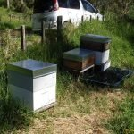 All the hives today