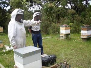 Beebuddies