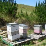 Club Hives Today