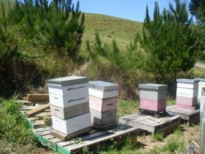 Club Hives