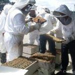 Beehives being inspected