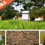 "The Beekeepers Q&A – The Fat Bee Man ""Don"" joined us."