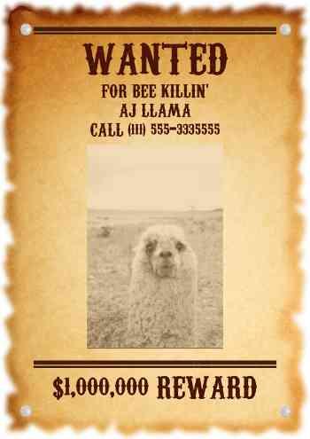 Wanted Llama