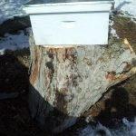 Hive and Tree Log