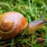 Slugs and Snails: Tips For Removing Them From Your Garden