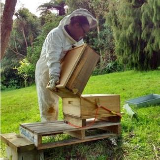 Beekeeper Consultation at your site