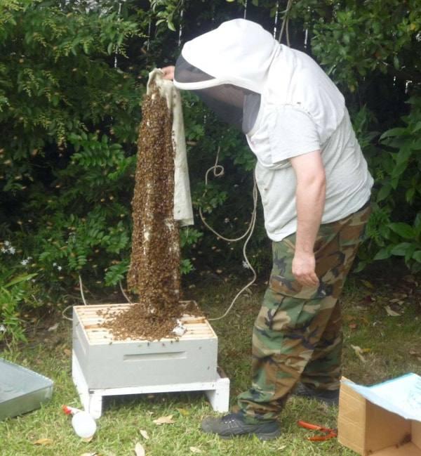 Gary and Bee Swarm