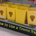 Timms Traps