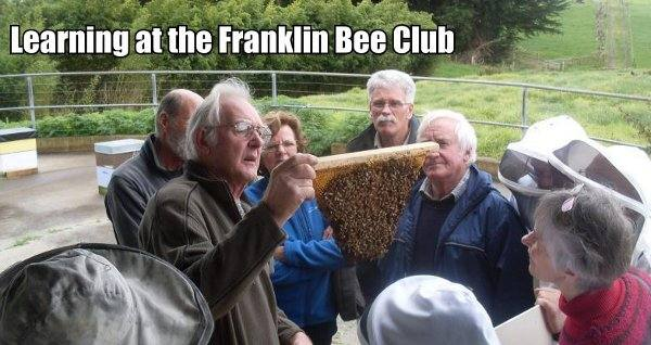 Learning at the Franklin Bee Club