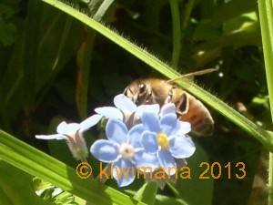 Close up Bee 2