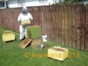 Gary Inspects Hives