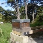 Bee Hive Stand – Introducing the kiwimana Hive Stand