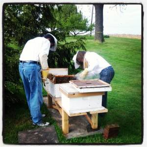 Josiah working BeeHives