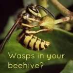 Wasps in your beehive – A Robbing Screen may help