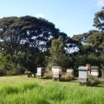 kiwimana Hq hives today