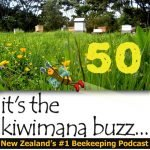 kiwimana buzz EP 50