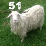 Louise The Goat – KM051