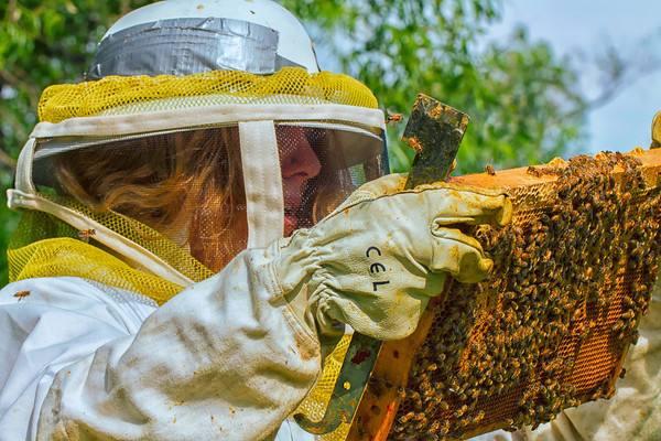 Erin Willett Inspects her Bees