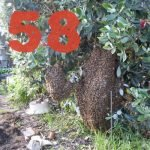 Swarms Coming Out of Our Ears – KM058