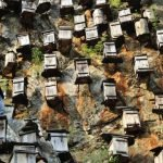Bees on Mountain