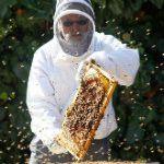 Anarchist Beekeeper