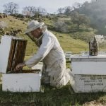 beekeepers are on endangered-species list