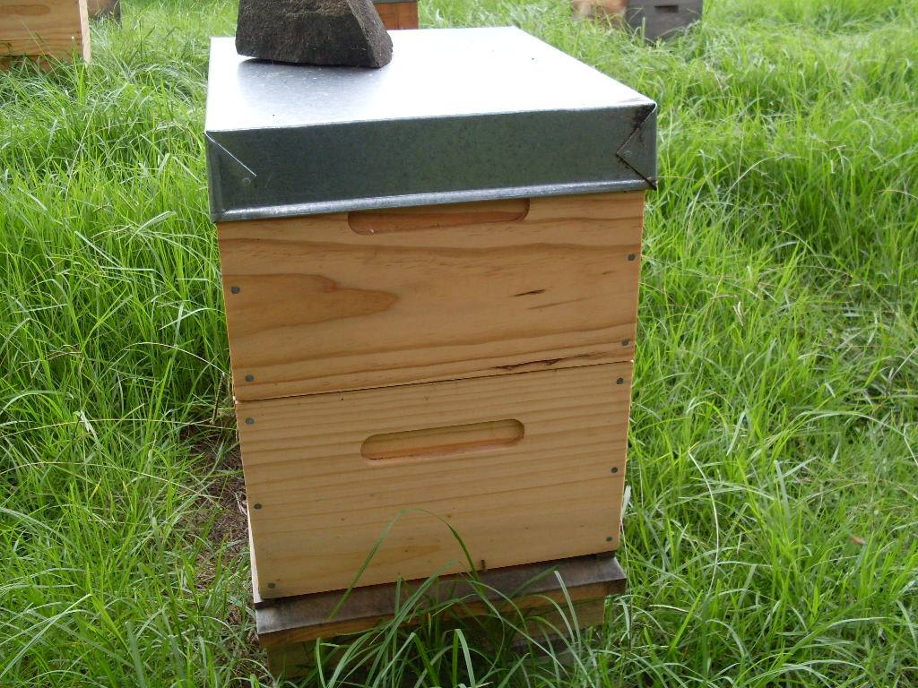Photo shows the standard Langstroth Beehive-configuration.
