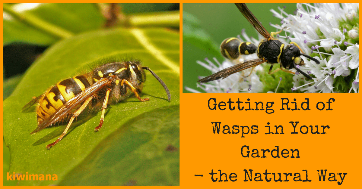 Getting Rid of Wasps in Your Garden: The Natural Way ...