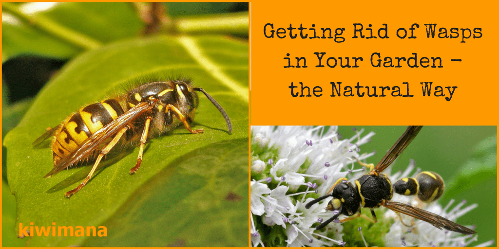 Natural Way Of Getting Rid Of Wasps