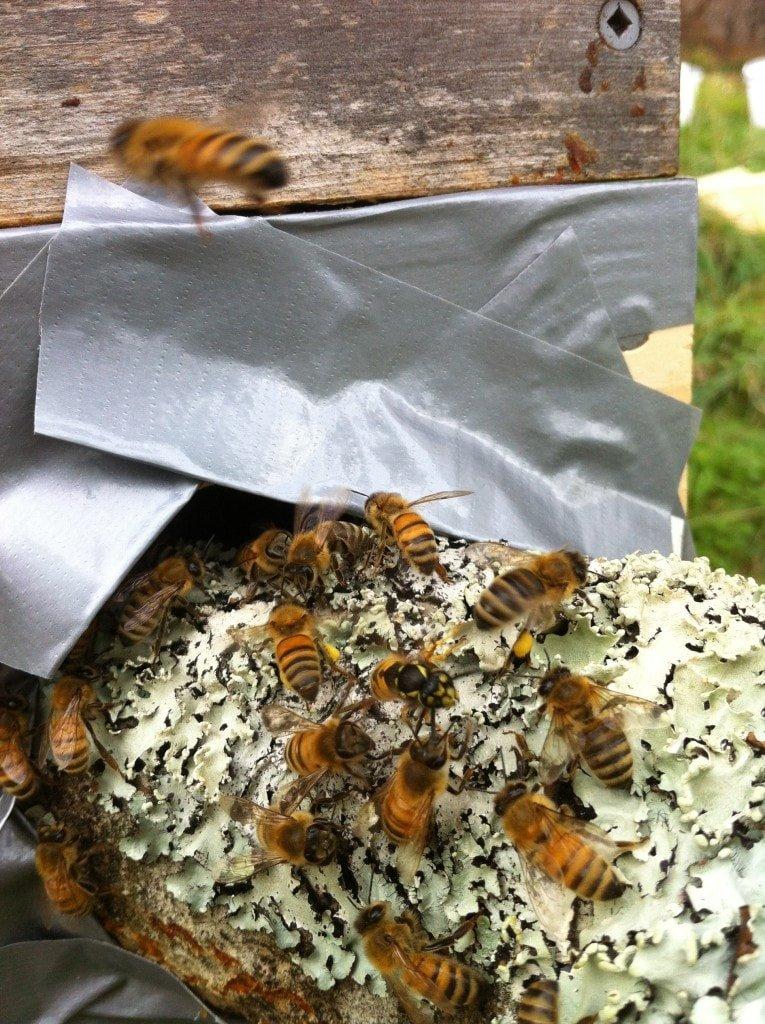 Girls attacking Wasp