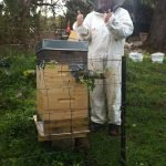 TreeHive Beehive …part two…swarming