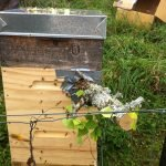move the treehive back to original position of the cardboard box