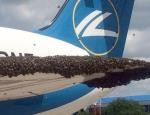 Russian plane attacked by bees