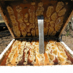 Whats happening in Aussie? honey beekeeping Spring