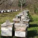 Commercial Beekeeping-Beehives