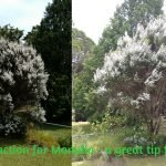 Honey extraction Idea for Manuka – a great tip from Aussie