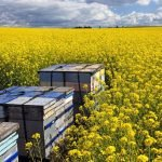 Commercial Beekeeping – How do you get started?