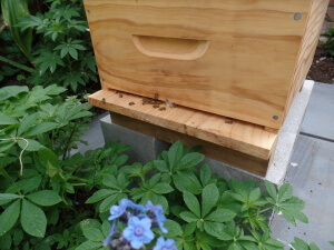 Quiet on the home front with bees coming and going with pollen before inspection